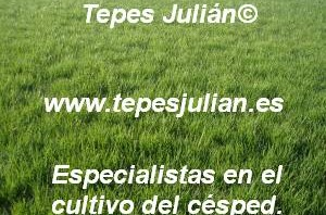 Plantar césped natural Tepes Julián.