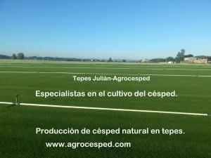 Plantación de césped Tepes Julián-Agrocesped
