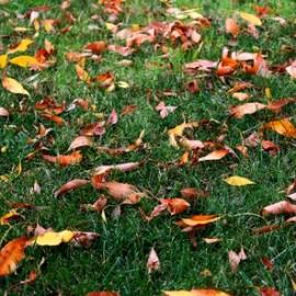 Césped con hojas