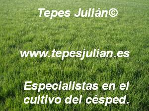 Plantar césped natural Tepes Julián.