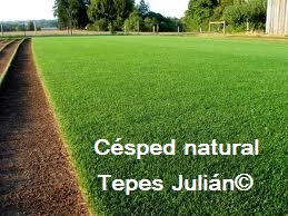 Plantación de césped natural Tepes Julián