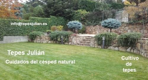Cuidados del césped natural