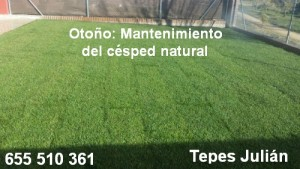 Mantenimiento del césped natural