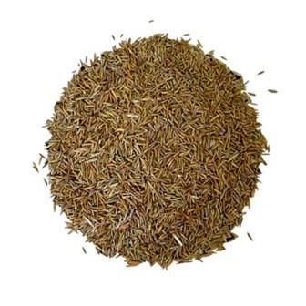 Semilla Ray Grass Inglés