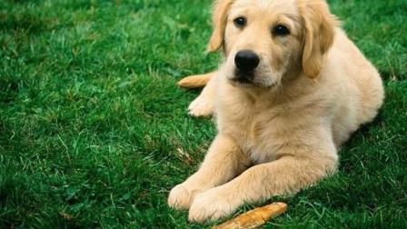 Césped natural para mascotas