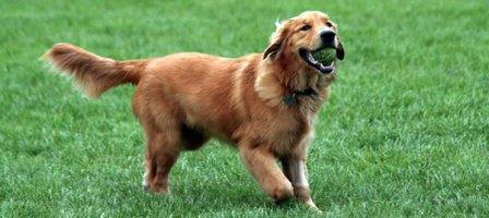 Césped natural para perros